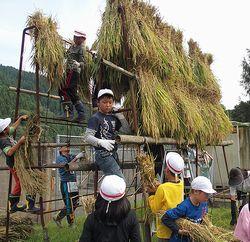 三岳小稲刈り