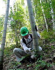 竹を切る研修