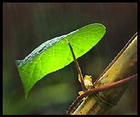 「雨やどり」