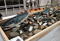 川魚を再現した木彫り作品