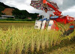 コンバインで稲を刈り取っていく