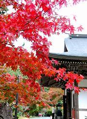 紅葉の長安寺