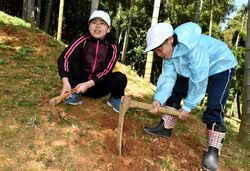 タケノコを掘る児童