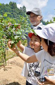 ブルーベリーの収穫体験