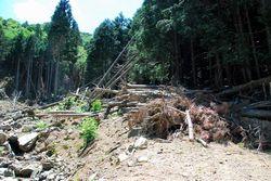 大量の流木などが堆積