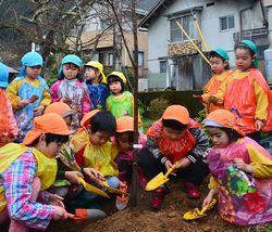 ヤマザクラを植える園児たち