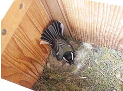卵を温める親鳥