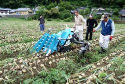 専用の機械を使って収穫
