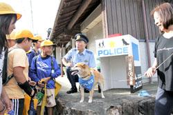 学童警戒犬の綾香